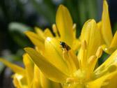 """""""Det er stor forskjell på å høre et insekt på soverommet og i hagen."""" Robert Staughton Lynd"""