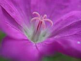 """""""Når man har plukket den fineste blomsten vil man nødig bytte den ut."""" Ordtak"""