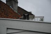 """""""Kan du si meg hvilken vei jeg bør gå for å komme vidre herfra?"""" """"Det avhenger i høy grad av hvor du ønsker å komme,"""" sa katten..."""