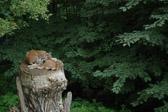 """""""Man behøver ikke å lære katter å klatre."""" Italiensk ordtak"""