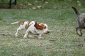 """""""Grunnen til at en hund har så mange venner, er at den logrer med halen istedenfor med tungen."""" Ukjent"""