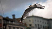 Ordene våre har vinger, men de flyr ikke alltid dit vi ønsker. George Eliot