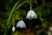 """""""Mange lever som frø, men vi er født til å blomstre. Sørg for at du slår ut i full blomst. Nøy deg ikke med å luke i hagen."""" Sitat"""
