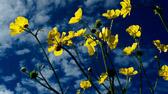 """""""Ingen elsker en himmel som alltid er blå. Variasjon er viktig."""" Anne Enger Lahnstein"""